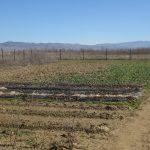 Локацијата на органско производство